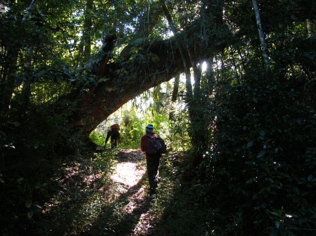 vandretur-regnskov